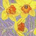 Daffodils by Joel Friedman