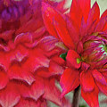 Dahlia Red by Deborah Benoit