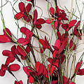 Dainty Red Floral Bouquet by Kirt Tisdale