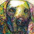 Daisy The Dog by Jon Kittleson