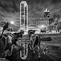 Dallas Skyline And Texas Longhorn Cattle Drive Sculptures - Black And White by Gregory Ballos