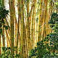 Dancing Bamboo by Sabrina L Ryan