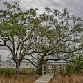 Daniel Island - Island Life by Dale Powell