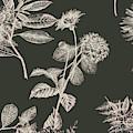 Dark Botanics  by Jorgo Photography - Wall Art Gallery