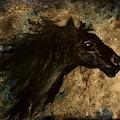Dark Horse Sketch          38 by Cheryl Nancy Ann Gordon