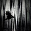 Darker - Raven by Dirk Wuestenhagen