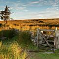 Dartmoor Gate At Sunrise IIi by Helen Northcott