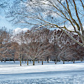 Dashing Through The Snow by Kim Hojnacki
