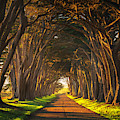 Dawn At The Cypress Tree Tunnel by Brad Scott