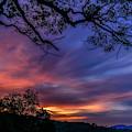 Dawn Of A June Day by Thomas R Fletcher