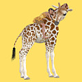 Daydreaming Of Giraffes Png by Betsy Knapp