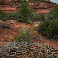 Dead Branches At Rock Formation by Rick Strobaugh