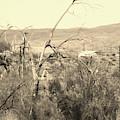 Dead Tree By Salton Sea In Sepia by Colleen Cornelius