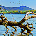 Dead Tree Geese, Smith Mountain Lake by James B Roney