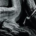 Dead Tree Trunk by Paul Nichols