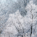 December Hoarfrost by Thomas R Fletcher