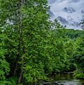 Deer Along Gauley River by Thomas R Fletcher