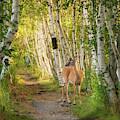 Deer In The Woods by Darylann Leonard Photography
