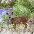 Deer by Mark Jackson
