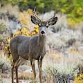 Deer by Vincent Bonafede