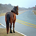 Delegate's Pride Awaiting Tourists On Assateague Island by Bill Swartwout Photography