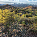 Desert Blooming In The Arizona Springtime by Dave Dilli