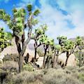Desert Forest by Scott Kemper