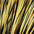 Desert Grasses II by Leda Robertson