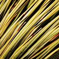 Desert Grasses IIi by Leda Robertson