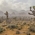 Desert Storm Arriving by Matthew Irvin