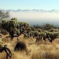 Desert Winter 1 by Clair Flatt