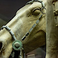 Details Of Head Of Horse From Terra Cotta Warriors, Xian, China by Karen Foley