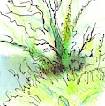 Devon Tree Hedgerow Undergrowth Drawing by Mike Jory