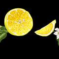 Digital Citrus by Yulia Fushtey