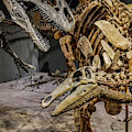 Dinosaurs In Battle by Tony Baca