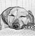 Django Napping by Kerin Bowen