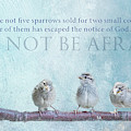 Do Not Be Afraid by Terry Davis