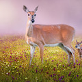 Doe And Fawn by Bill Wakeley