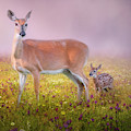 Doe And Fawn Square by Bill Wakeley