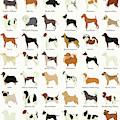 Dog Breeds by Zapista Zapista