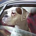 Dog In A Car by Aerogondo2