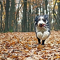 Dog Running In Forest by Regarder Tout Autour De Soi