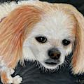 Dog With Soulful Eyes by Karen Zuk Rosenblatt