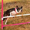Doggie Agility  by Debbie Stahre