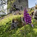 Dolwyddelan Castle In Wales  by John McGraw
