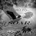 Don't Fly, Soar In Black And White  by Debra and Dave Vanderlaan