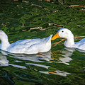 Dos Duckies by Keith Smith