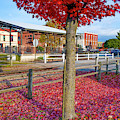 Downtown Rogers Arkansas Autumn Fall Landscape by Gregory Ballos