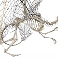 Dragon Skeleton  by Betsy Knapp