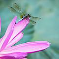 Dragonfly Resting On A Pink Petal by Sabrina L Ryan